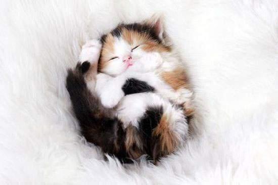 鞠のようにまるまって眠る赤ちゃんねこ。きっといい夢を見ていることでしょう。