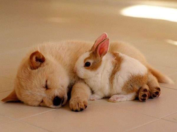 「もう、ねちゃった?」すやすや眠る子犬と、まだまだ一緒に遊びたそうなウサギ。