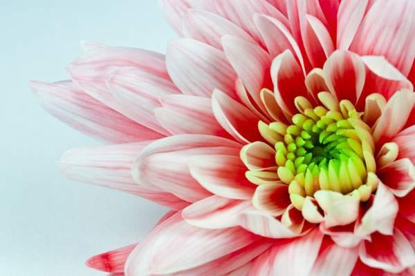 アップで撮影した花の写真
