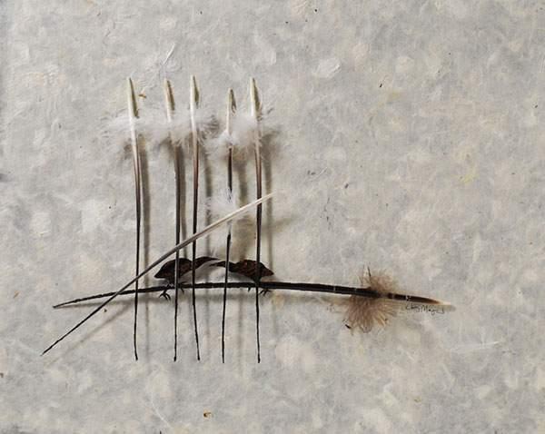 鳥の羽を鳥の形に切り抜いたアート作品 - 08