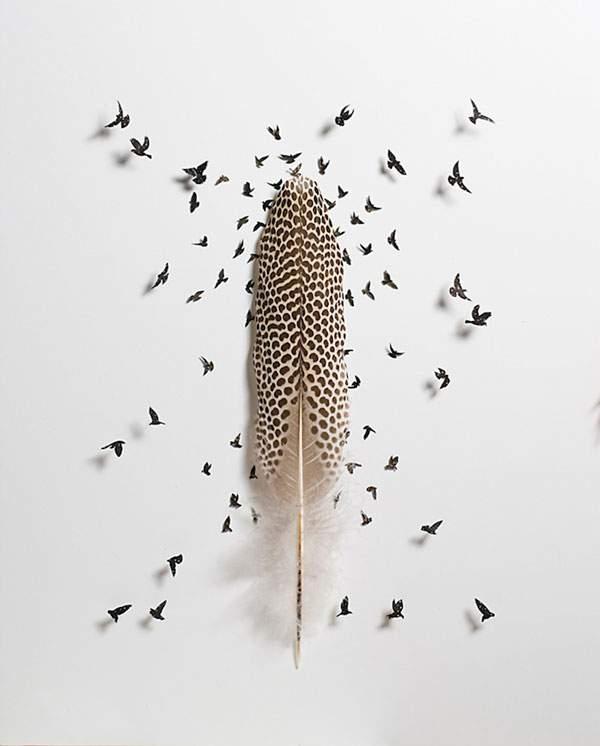鳥の羽を鳥の形に切り抜いたアート作品 - 09