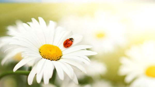 flower | 353 86