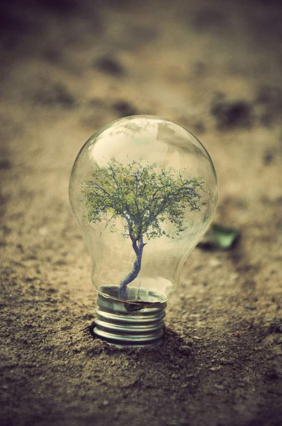 flourished bulb