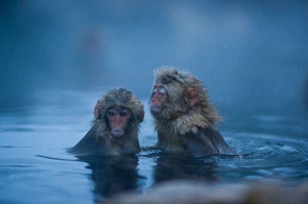 温泉を楽しむニホンザル達 - 07