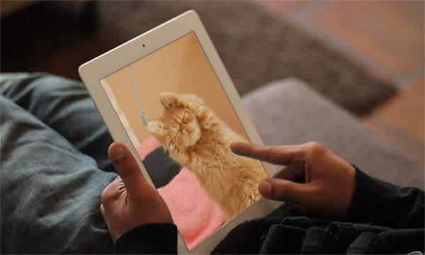 手持ちの猫画像をはめ込み合成