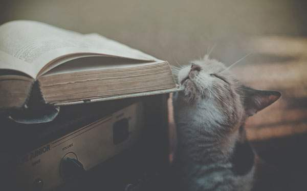 ぼんやりとしたボケが綺麗なレトロ調の猫写真