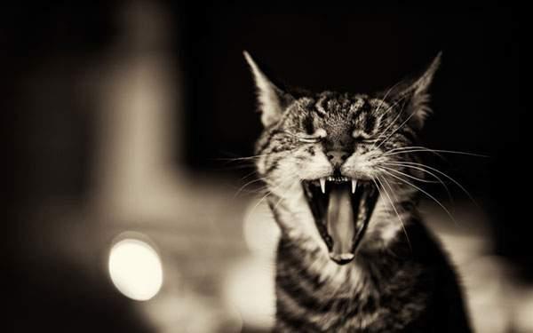 クッキリしたモノクロで撮影されたあくびするネコ