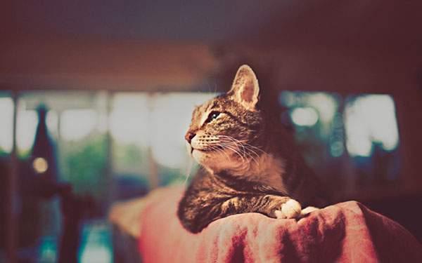 トイカメラ風の色合いがきれいな猫写真