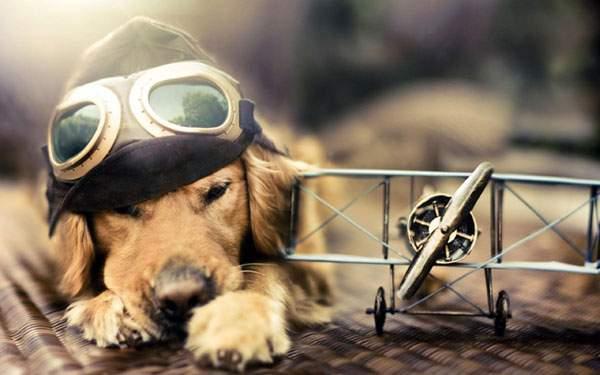 ゴーグルをつけた犬がおしゃれでかっこいい壁紙