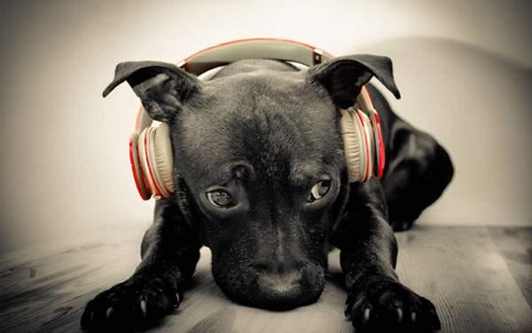 ヘッドフォンをつけた黒犬