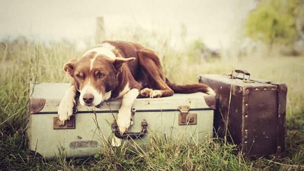 旅行鞄と犬のレトロな写真