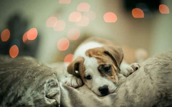 光のボケがおしゃれな犬の写真