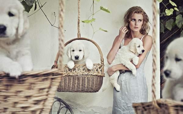 カゴに入った子犬と女性