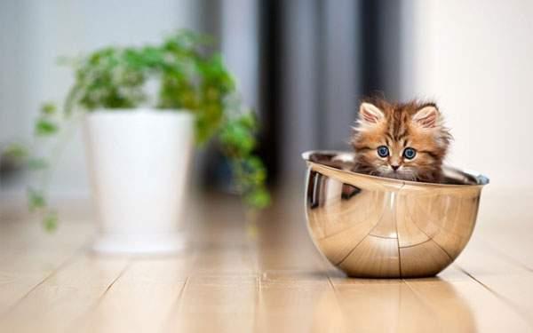ボールの中に入った子猫
