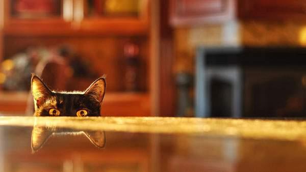 テーブルの上から覗く黒猫