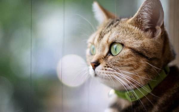 外の景色を見つめる猫