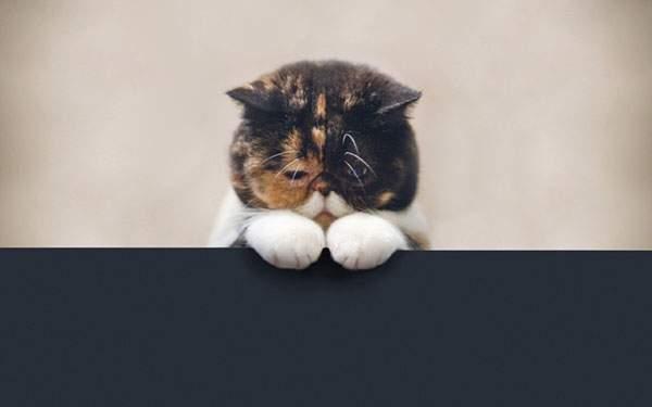 黒い壁の上から覗く猫