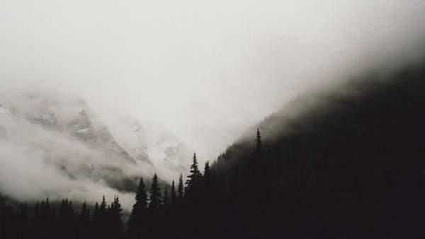 まるで水墨画のような霞がかった森