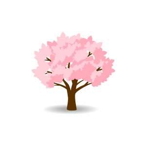 桜 - 木