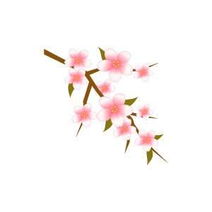桜の花と枝