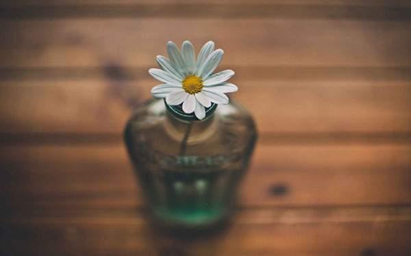 瓶に挿した白い花