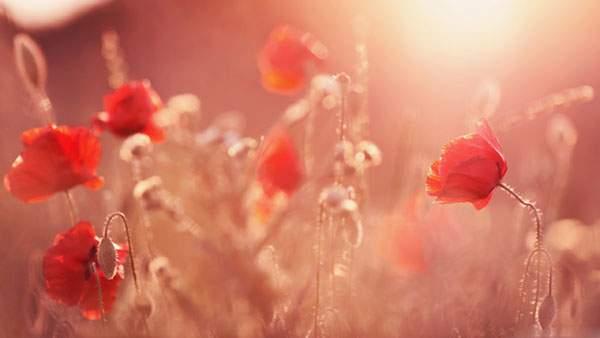 赤い花と夕日
