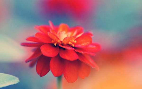 カラフルで幻想的な花の写真