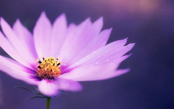 ボケの美しい花の写真