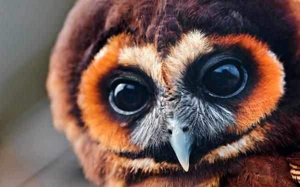 フクロウをアップで撮影した写真