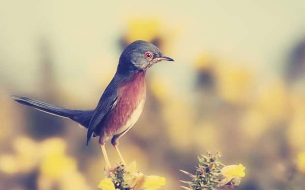 花にとまった小さな鳥