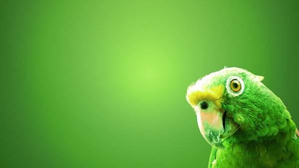 グリーンが綺麗なインコの画像
