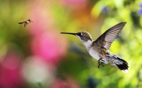 蜂とハチドリ