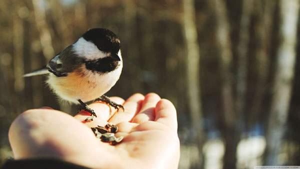 手のひらにとまった小鳥