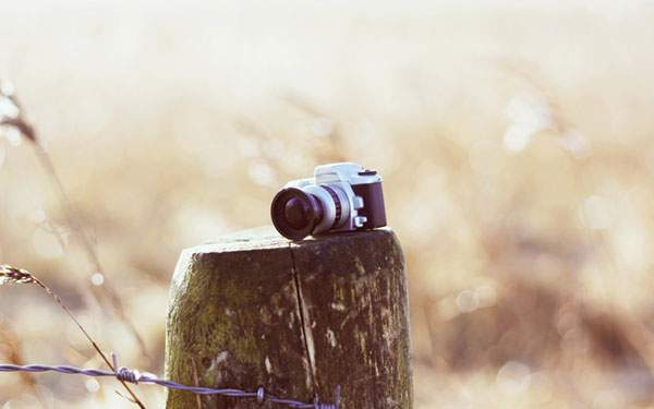 木の上に置かれたかわいいカメラ