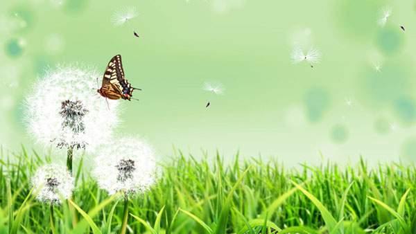 綿毛と草と蝶々