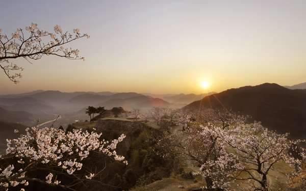 朝日と山と桜の和風画像