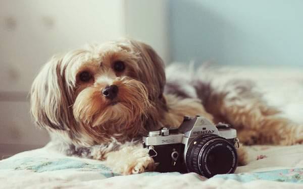 カメラを構えるフサフサの犬