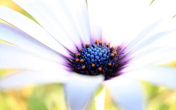 かわいい白い花