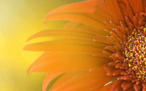 黄色い光が綺麗なオレンジの花
