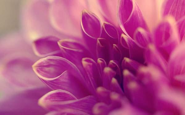 繊細な雰囲気の紫の花
