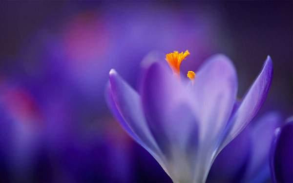 前と後ろのボケが綺麗な紫の花