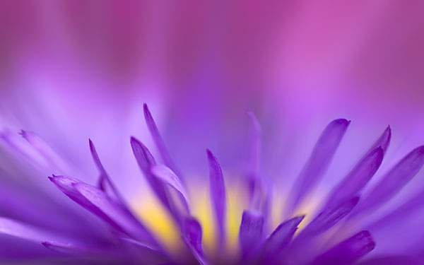 細かい花びらにピントを合わせた鮮やかな色の写真