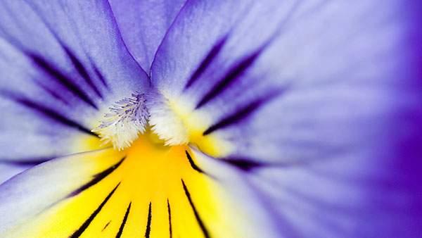 花の中心にピントを合わせたマクロ写真