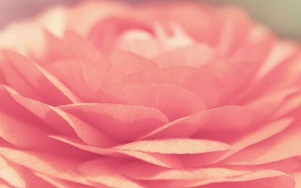 重なる花びらが繊細で綺麗なマクロ撮影した写真