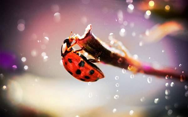 きらきら輝く雫とてんとう虫