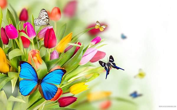 色とりどりの花と蝶