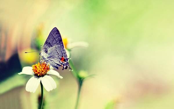 レトロな色調の蝶々の壁紙写真