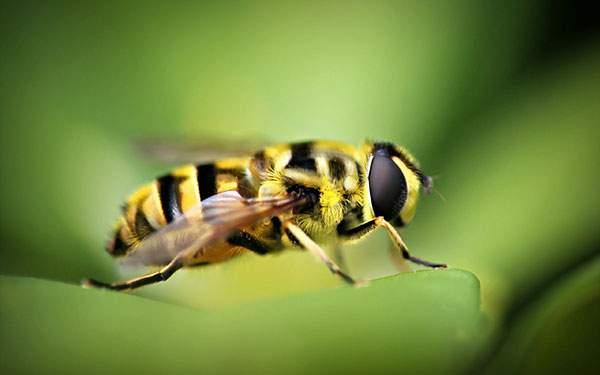 葉の上のハチ