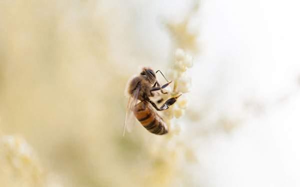 淡い黄色の蜂の写真