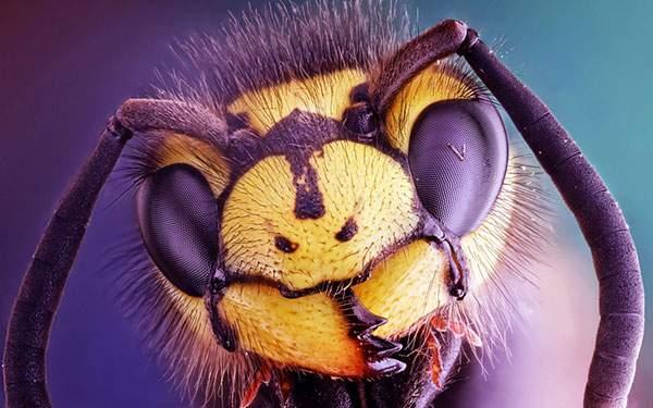 蜂の顔をアップでマクロ撮影した写真